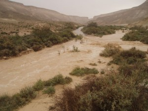 Streams in the Negev - Nahal Zin